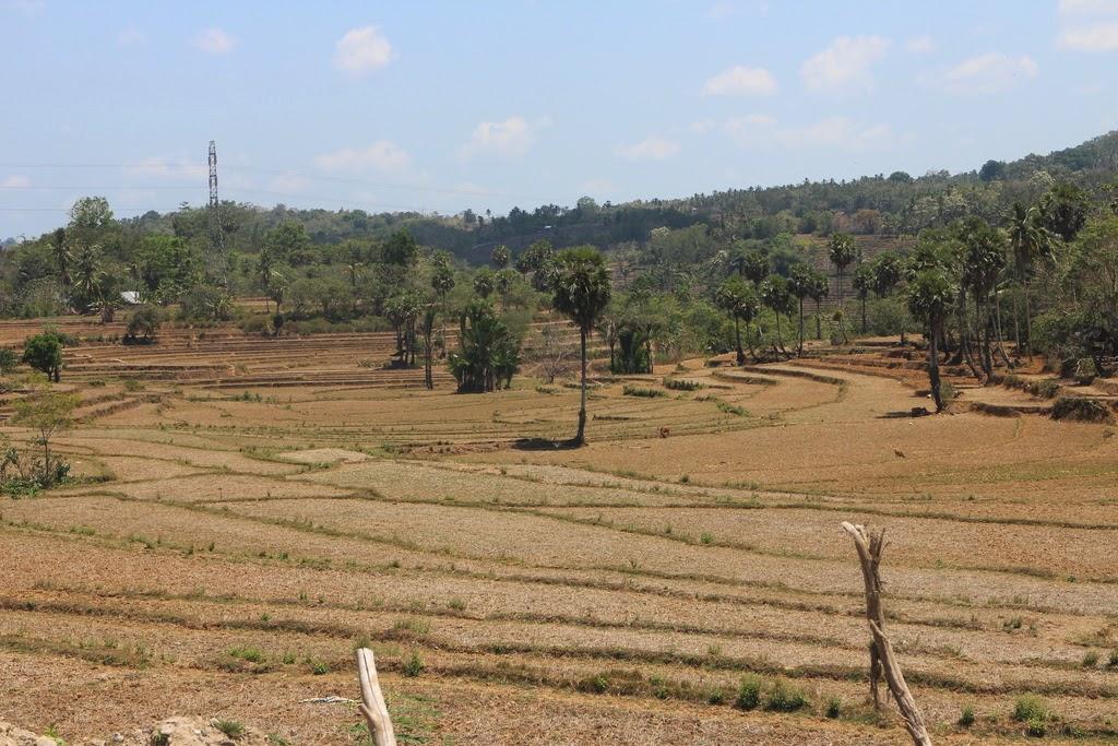 Fluctuation, intervalle, terminale, binomiale, Sulawesi, Indonésie